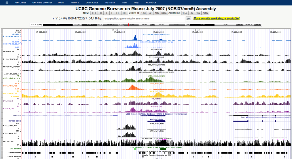 Aligned sequence visualisation using the UCSC Genome Browser.