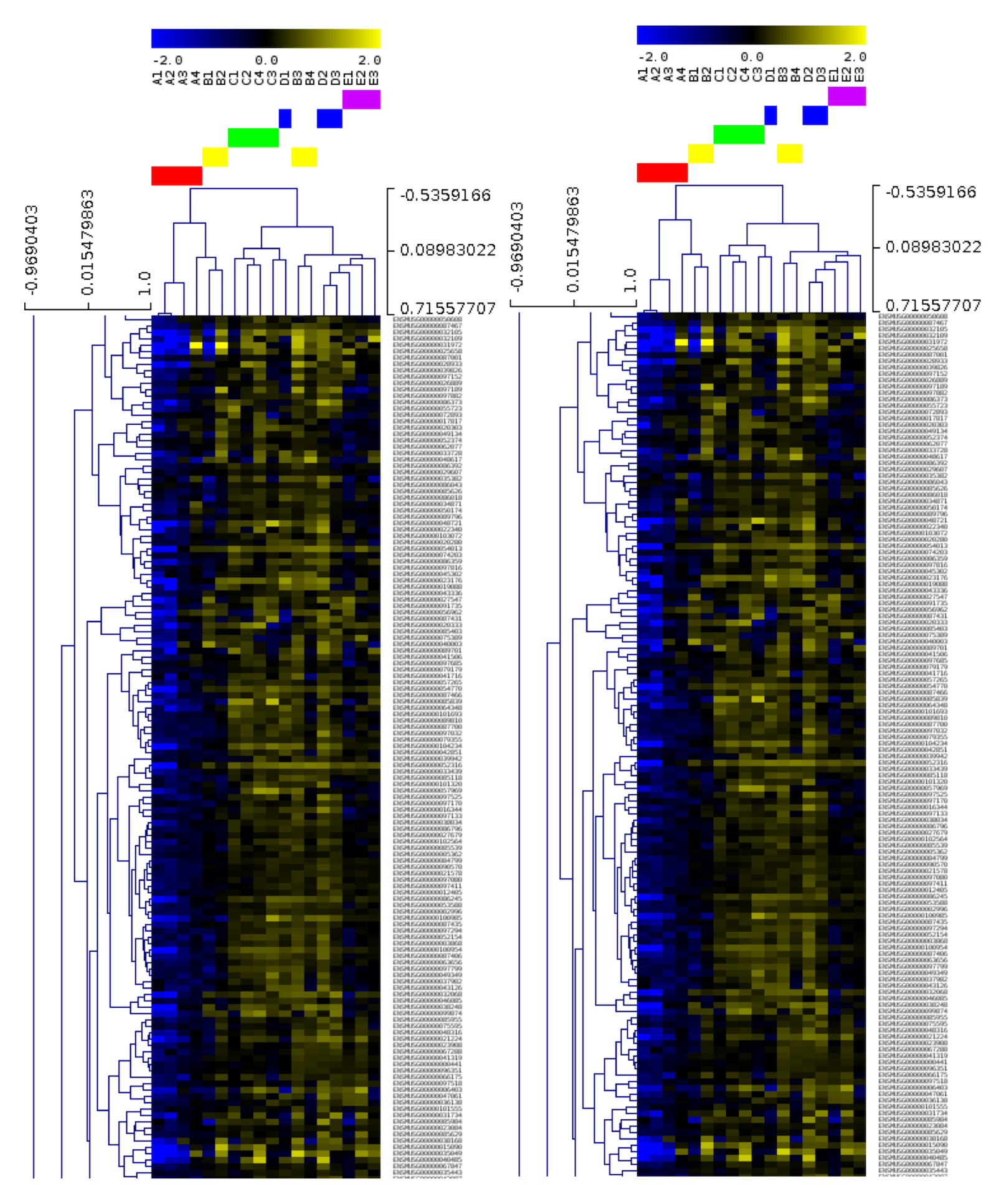 Heatmap generated from transcriptomic data from heart samples (Nathalia Tan)