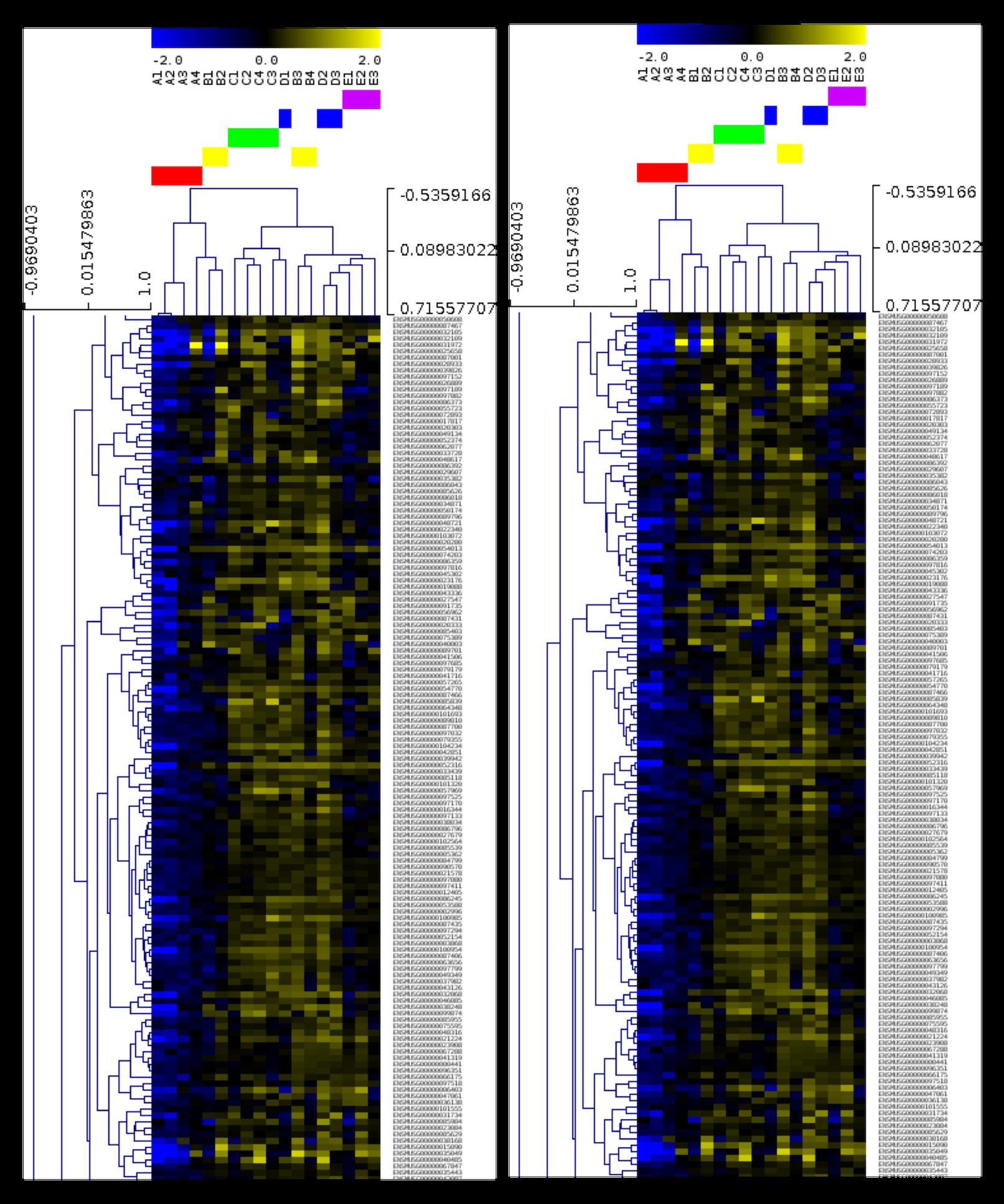 Heatmap generated from transcriptomic data from heart samples (Nathalia Tan)